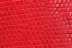 Struttura del primo piano rosso del leatherette. Fotografie Stock