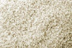 Struttura del raccolto del riso bianco Fotografie Stock Libere da Diritti