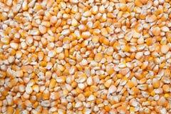 Struttura del seme del cereale Fotografia Stock Libera da Diritti