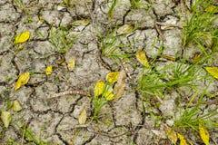 Struttura del suolo del giacimento del riso Fotografie Stock