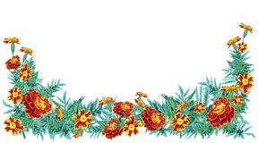Struttura del tagete del fiore grande Immagine Stock