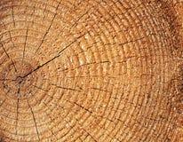 Struttura del taglio dell'albero di pino Fotografia Stock