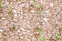 Struttura del terreno asciutto Fotografie Stock