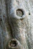 Struttura del tronco Fotografie Stock