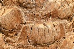 Struttura del tronco della palma sulla fine della spiaggia sul modello fotografie stock libere da diritti