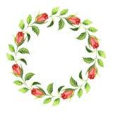 Struttura dell'acquerello con i fiori e le foglie rosa Fotografie Stock Libere da Diritti