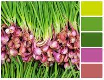 Struttura dell'aglio con i campioni di colore della tavolozza Immagine Stock Libera da Diritti