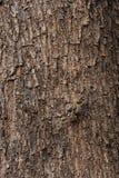 Struttura dell'albero fotografie stock