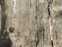 Struttura dell'albero Immagine Stock Libera da Diritti