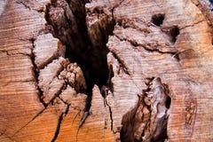 Struttura dell'albero Fotografia Stock