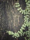 Struttura dell'albero con dave Immagine Stock