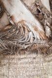 Struttura dell'albero del plam Fotografia Stock Libera da Diritti