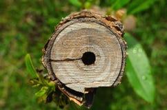 Struttura dell'albero del taglio Immagini Stock