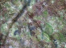 Struttura dell'albero di corteccia Fotografia Stock