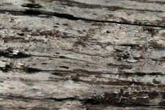 Struttura dell'albero di corteccia Immagini Stock