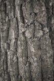 Struttura dell'albero di corteccia Immagini Stock Libere da Diritti
