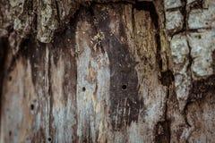 Struttura dell'albero di corteccia Fotografie Stock