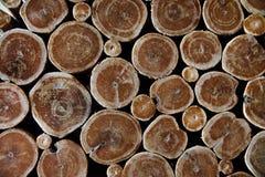 Struttura dell'albero di sezione trasversale del fondo Priorità bassa di legno Struttura di legno della parete Immagine Stock Libera da Diritti