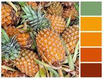 Struttura dell'ananas con i campioni di colore della tavolozza Fotografia Stock