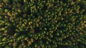 Struttura dell'cime d'albero verdi La Siberia, taiga dalla vista dell'uccello-occhio video d archivio