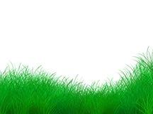 Struttura dell'erba Immagini Stock Libere da Diritti