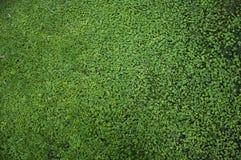 Struttura dell'erba Fotografie Stock Libere da Diritti