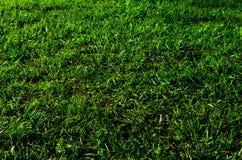 Struttura dell'erba fotografie stock