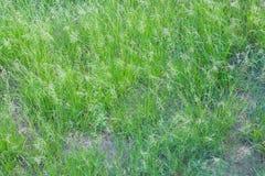 Struttura dell'erba Immagine Stock Libera da Diritti