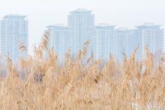 Struttura dell'erba asciutta del prato con i blocchetti del fogy ed il cielo bianco Inverno Fotografie Stock Libere da Diritti