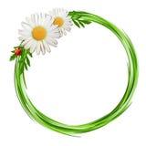 Struttura dell'erba con i fiori e la coccinella della margherita. Fotografia Stock