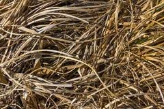Struttura dell'erba di autunno Fotografia Stock Libera da Diritti