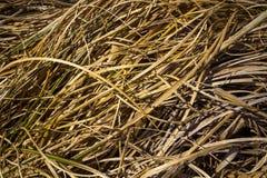 Struttura dell'erba di autunno Fotografia Stock