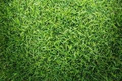 Struttura dell'erba o fondo dell'erba erba verde per progettazione di massima del campo da golf, del campo di calcio o del fondo  Immagini Stock Libere da Diritti
