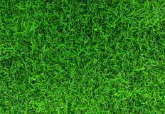 Struttura dell'erba verde Fotografia Stock Libera da Diritti