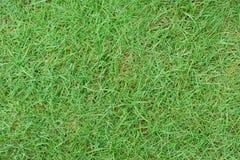 Struttura dell'erba verde all'aperto nell'alta risoluzione Fotografie Stock Libere da Diritti