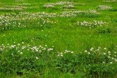 Struttura dell'erba verde da un campo Fotografie Stock
