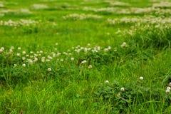 Struttura dell'erba verde da un campo Immagine Stock