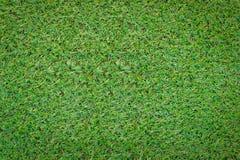 Struttura dell'erba verde jpg Fotografia Stock
