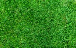 Struttura dell'erba verde per priorità bassa Fondo verde del modello e di struttura del prato inglese Primo piano fotografia stock