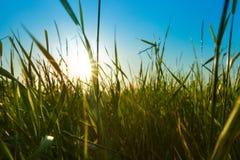 Struttura dell'erba verde sopra cielo blu Immagine Stock Libera da Diritti