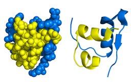 Struttura dell'insulina Immagini Stock