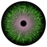 Struttura dell'occhio colorized verde illustrazione di stock