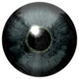 Struttura dell'occhio di gray blu illustrazione vettoriale