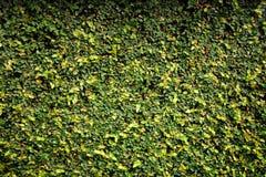 Struttura della barriera delle foglie Fotografia Stock Libera da Diritti