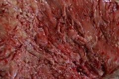 Struttura della carne Fotografie Stock