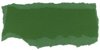 Struttura isolata della carta della fibra - felce verde Fotografia Stock Libera da Diritti