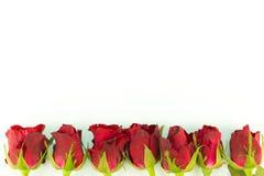 Struttura della cartolina d'auguri delle rose rosse su un fondo bianco con lo spazio della copia ed usando come concetto di giorn Immagine Stock Libera da Diritti