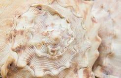 Struttura della conchiglia Fotografie Stock