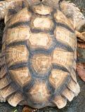 Struttura della corazza della tartaruga , modello sul backgrou della carapace Fotografie Stock Libere da Diritti