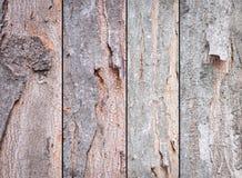 Struttura della corteccia Fotografia Stock Libera da Diritti